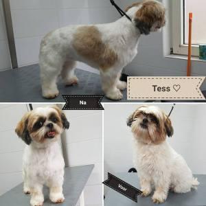 hond getrimd Tess