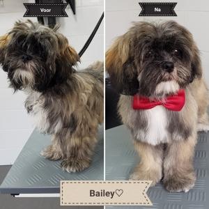 Kapsalon voor honden