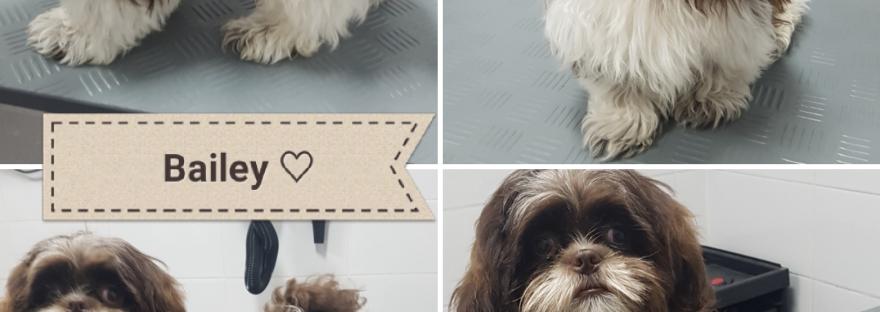 Hondenkapsalon Valkenswaard