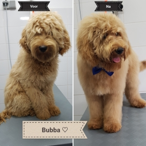 Hond laten trimmen in Valkenswaard