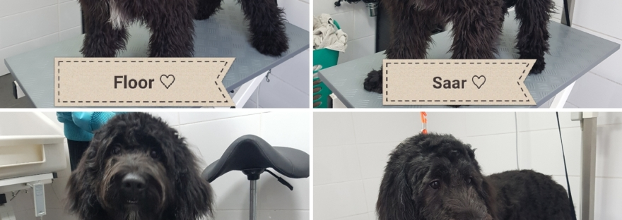 Hond trimmen in Valkenswaard