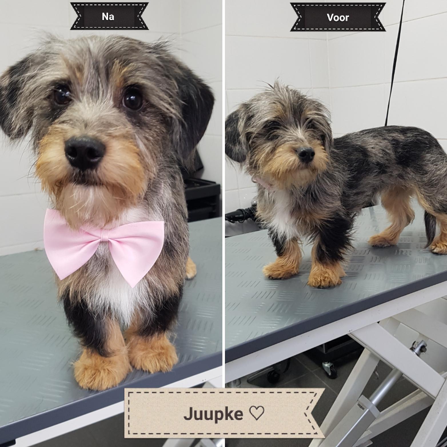 Hond laten trimmen