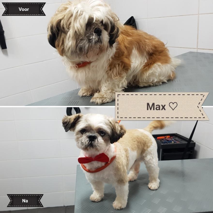 Hond getrimd Max