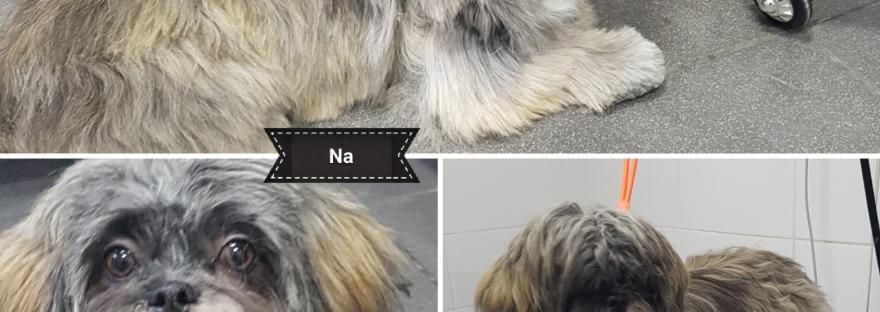 Bailey hond trimmen