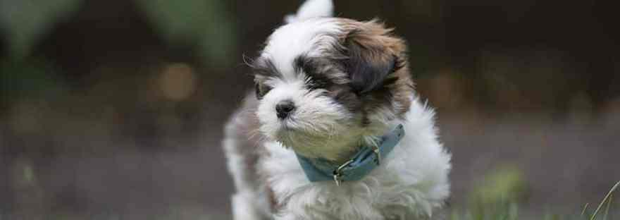 boomer hondje in het gras